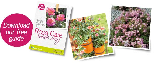 download-rose-care-guide