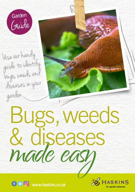 bugs-and-weeds-care-leaflet-1